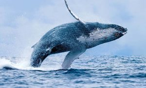 'Ethereum Menjadi Rantai Ikan Paus, Masalah Serius', Pengusaha Crypto