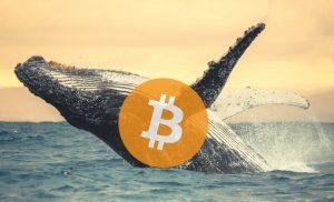 Pengguna Mentransfer $ 1,15 Miliar (0,4% Dari Whole Bitcoin) Ditransfer dengan Biaya $ 3,6