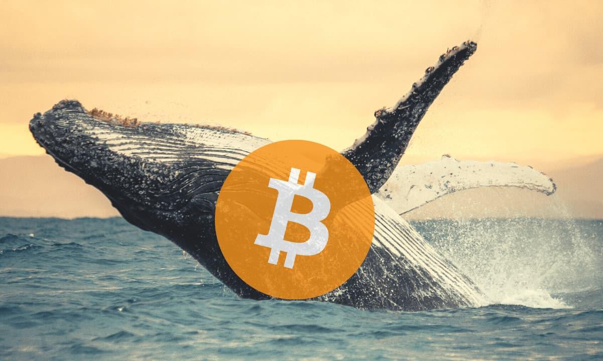 Whales Bitcoin Melambat Setelah Bulan Akumulasi: Bagaimana Dengan Harga BTC?